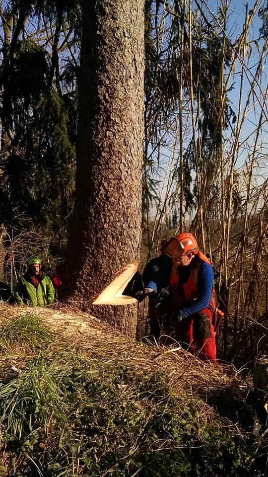 arboricoltura1